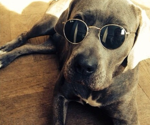 hipster dog lovely cute image