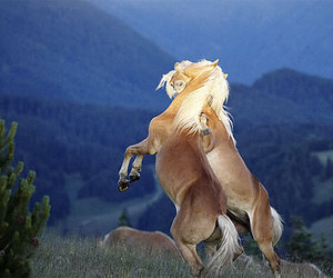 animals, horses, and mountains image