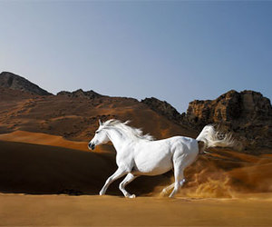 horse, animal, and desert image