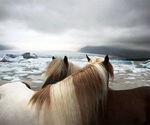 horse, animal, and ice image
