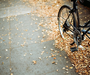 bikes, fall, and film image