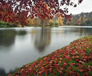 autumn, beauty, and creation image