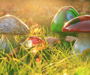 cogumelos, grass, and green image