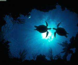 turtle, ocean, and blue image