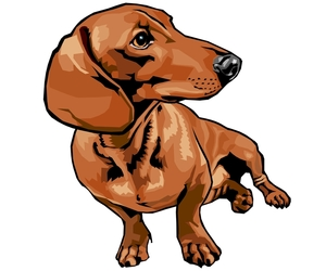 dachshund, dog, and drawing image