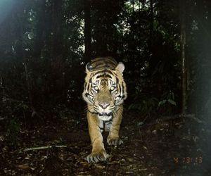 tiger, photography, and animal image