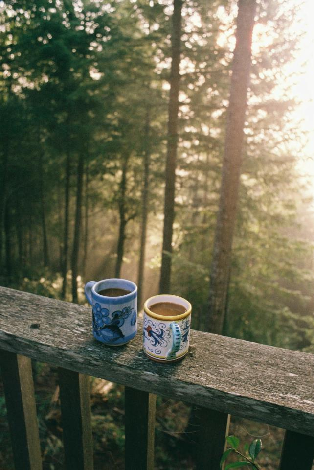 cups, tumblr, and woods image