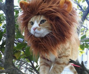 cat, lion, and animal image
