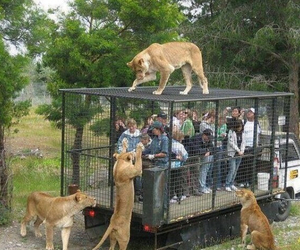 animals, cage, and zoo image