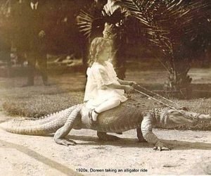 alligator, crazy, and funny image