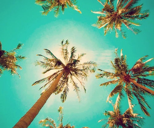 palm, trees, and beach image