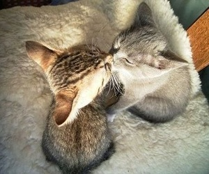 cat, fluffy, and kisses image