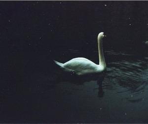Swan, grunge, and vintage image