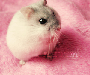 pink, cute, and hamster image