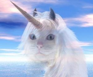cat unicorn image