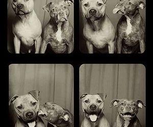 dog, animal, and kiss image