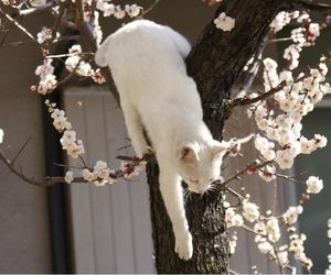 cat and tree image