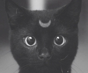 black and white, cat, and luna image