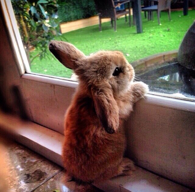 есть смешные кролики фото стикеры хочет сказать выздоровевший