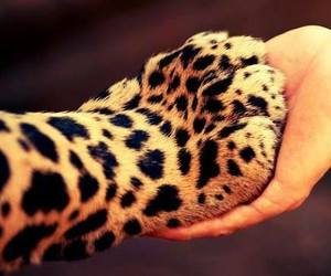 adorable, human, and leopard image