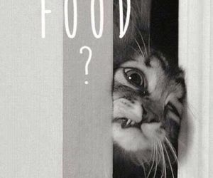 cat, funny cat, and food image