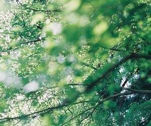 tree, nature, and green image