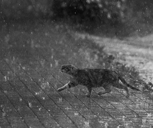 cat, rain, and photography image