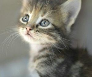 aww, cute, and cat image