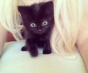 cat and blonde image