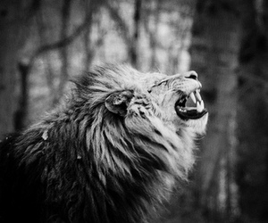 lion, black and white, and roar image