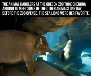 funny, elephant, and awesome image