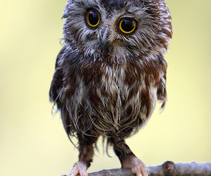 owl, owls, and cute image