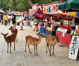deer and japan image