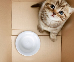 cat, box, and animal image