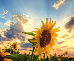 flower, yellow, and just perfect image