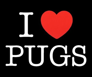 dog, i love, and pugs image