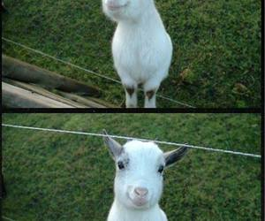 baby, funny, and goat image