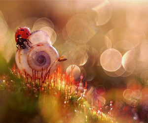nature, ladybug, and snail image