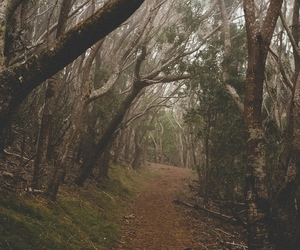 forest, pretty, and hipster image