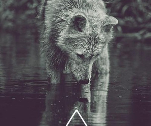 wolf, water, and yourself image
