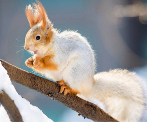 animal, free, and nut image