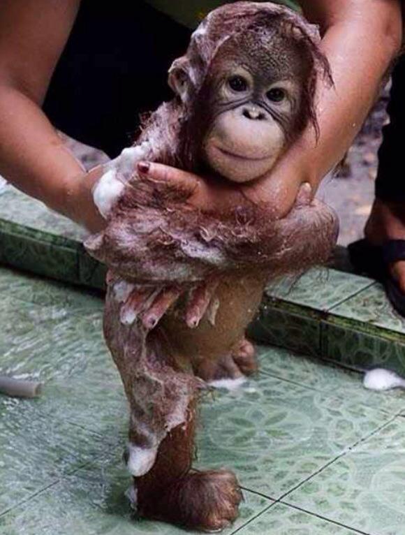 animals, monkey, and bath image