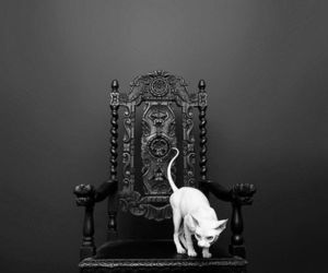 cat, chair, and white image