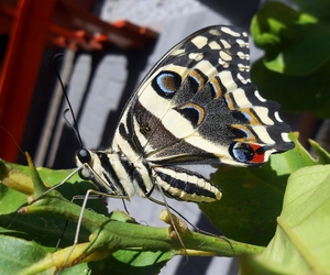 butterfly, wings, and insect image