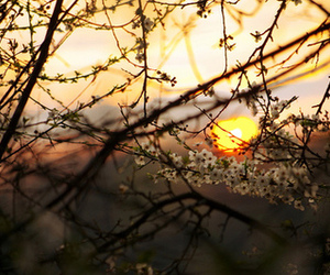 bright, flowers, and dawn image