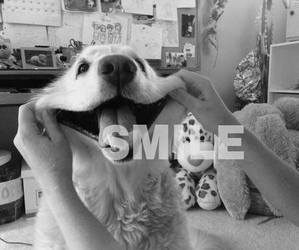 smile, dog, and happy image