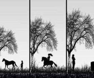 equestrian, life, and natur image