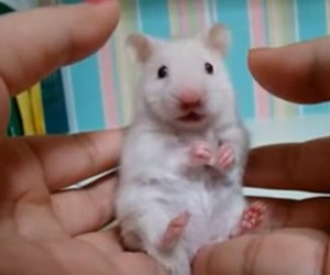 mouse and pet image