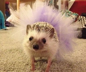 hedgehog, funny, and tutu image