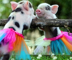pig, animal, and tutu image